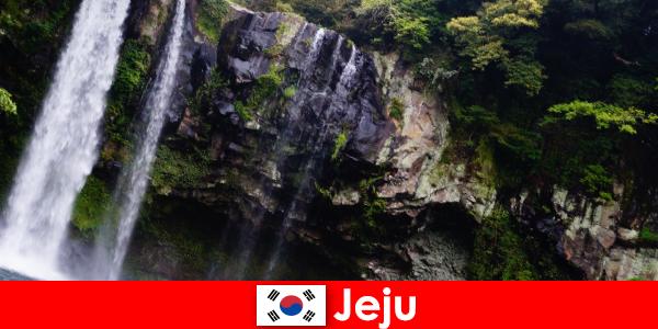Jeju ở Hàn Quốc hòn đảo núi lửa cận nhiệt đới với những khu rừng tuyệt đẹp cho người nước ngoài