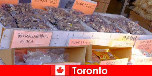 Toronto và ẩm thực đặc biệt đa dạng của nó không làm cho một du khách chết đói