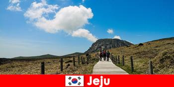 Khách du lịch đi bộ qua cảnh quan thiên nhiên tuyệt vời ở Jeju Hàn Quốc