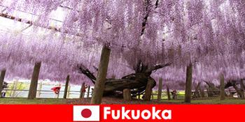 Những chuyến đi thiên nhiên cho người lạ trong thiên nhiên hoang sơ của Fukuoka Nhật Bản