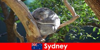 Điểm đến Sydney Australia trong sở thú kỳ lạ với trải nghiệm qua đêm