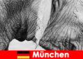Chuyến đi đặc biệt cho du khách đến sở thú nguyên bản nhất ở Đức Munich